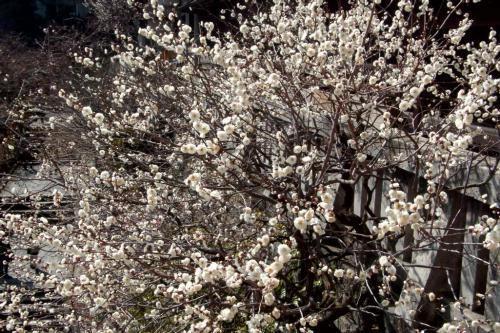 200517ZG.jpg